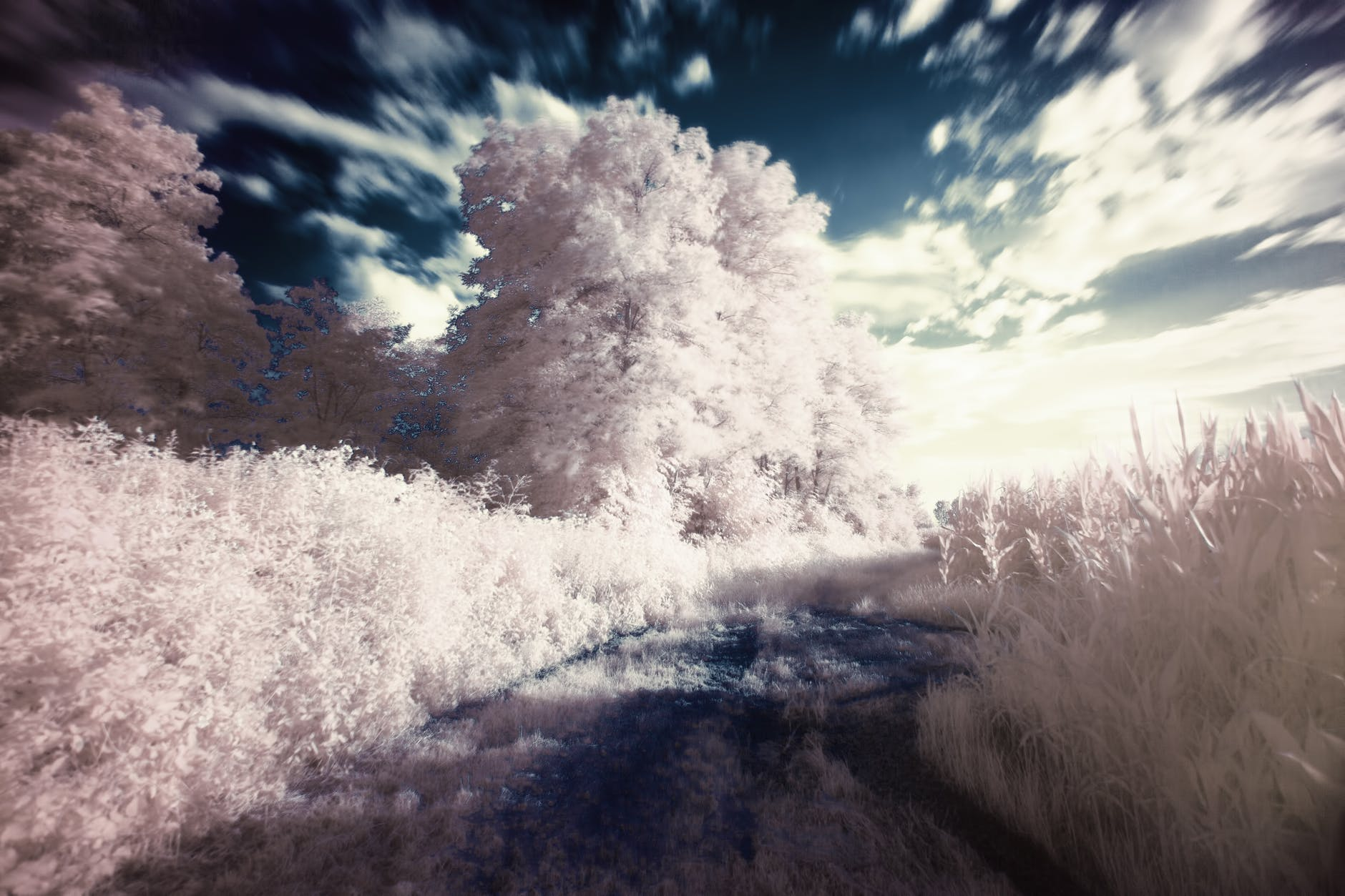 dream filter infrared surreal